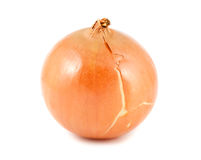 Single onion bulb Royalty Free Stock Photo