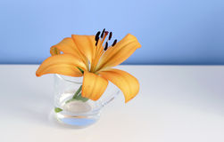 Single orange liliy in a glass of clear water, purity or freshness concept Stock Images