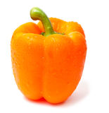 Single orange pepper on white Royalty Free Stock Images