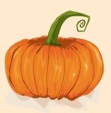 Single Orange Pumpkin Royalty Free Stock Image