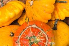 Single orange pumpkin back Stock Photos