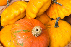 single orange pumpkin Royalty Free Stock Images