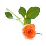 Single orange rose. Isolated on white background royalty free stock photo