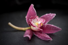 Single orchid flower Stock Photos
