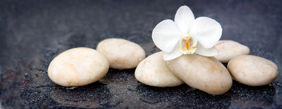 Single orchid flower and white stones. Stock Image