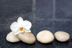 Single orchid flowers and white stones. Royalty Free Stock Images