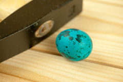 Single ordinary black heavy hammer head beside a common quail egg painted in blue with spots pattern Stock Image