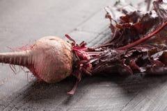 Single organic beet Royalty Free Stock Photo