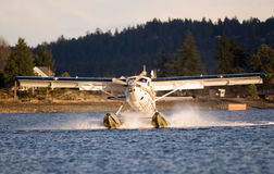 Single Otter Landing Stock Photos