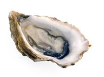 Single oyster on white Royalty Free Stock Photography