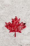 Single painted red maple leave Stock Photography