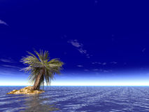 Single palm. On the uninhabited island on a day Royalty Free Stock Photos