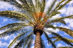 Single palm Royalty Free Stock Images