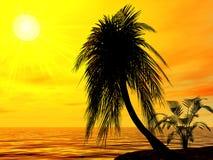 Single palm Stock Photo