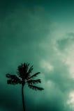Single Palm Against Tropical Sky Stock Photo
