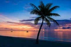Single Palm Royalty Free Stock Photo