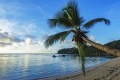 Single palm on paradise beach, seychelles 1 Stock Photos