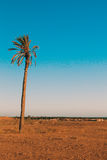 Single palm in Sahara Africa Royalty Free Stock Photo