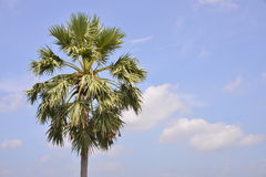 A single palm. With sky background Royalty Free Stock Photography