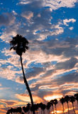 Single Palm at Sunset Royalty Free Stock Photos