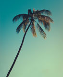 Single Palm At Sunset. One Palm Tree Against Turquoise Sky With Copy Space Royalty Free Stock Photography