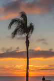 Single palm at sunset with a person looking out to sea Royalty Free Stock Images