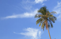 Single palm tree Royalty Free Stock Photo