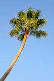 Single palm tree Stock Photos