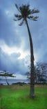 Single palm tree. By coast Stock Photography