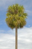 Single palm tree. With partly cloudy blue sky royalty free stock images