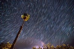 Single Palm Tree agains Star-trail sky Royalty Free Stock Photos