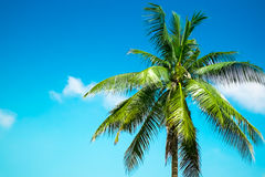 Single palm tree. Against the blue sky and cloud Stock Photo