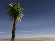 A Single palm tree on a beach Stock Photos