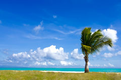 Single - palm tree on the beach Stock Photo