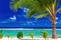 Single palm tree on the beach overlooking green lagoon. Single palm tree on the beach overlooking amazing green lagoon Royalty Free Stock Images