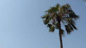 Single Palm Tree stock footage