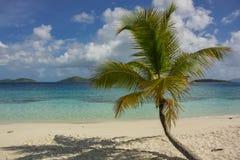Single Palm Tree in Caribbean. A single palm tree on the beach of Salomon Bay in St. John Stock Photo