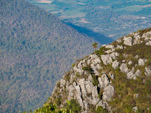 Single palm tree grows alone on the mountain ridge. Be full of limestone with the other mountain and village at distance, Doi Luang Chiang Dao, Chiang rai Royalty Free Stock Images
