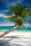 Single palm tree hangoing over blue lagoon Royalty Free Stock Photography