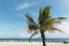 Single palm tree with out of focus Ipanema beach, Brazil. Single palm tree with out of focus Ipanema beach in Rio de Janeiro, Brazil background Stock Photos