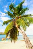 Single palm tree over white sand beach and sea view of Seychelle. S Stock Photo