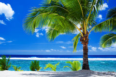 Single palm tree overlooking amazing lagoon. Single palm tree overlooking amazing blue lagoon Stock Photography
