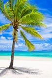 Single palm tree overlooking amazing lagoon. Single palm tree overlooking amazing blue lagoon Royalty Free Stock Images