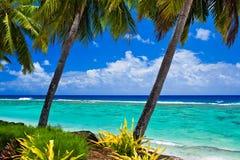 Single palm tree overlooking amazing lagoon. Single palm tree overlooking amazing blue lagoon Royalty Free Stock Photography