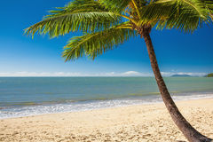 Single palm tree at Palm Cove beach in north Queensland Stock Photography