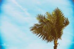 Single Palm Tree - Retro Filtered.  Stock Photography