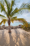 Single palm tree on sandy beach and calm lagoon Stock Images