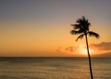 Single palm tree in silhouette in sunset off Maui. Sun setting behind single palm tree off Hawaiian island of Maui with island of Molokai in background Stock Photo