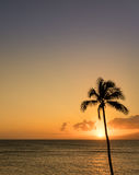 Single palm tree in silhouette in sunset off Maui. Sun setting behind single palm tree off Hawaiian island of Maui with island of Molokai in background Stock Images
