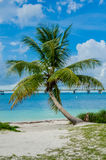 Single Palm Tree Sits Against the Caribbean Sea. An isolated palm tree in front of the crystal clear waters off the coast of the Florida Keys royalty free stock photography